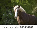 draft horse portrait of a south ...