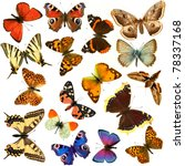 Stock photo butterfly s in the white background 78337168
