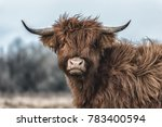 Scottish Highlands Close Up Head