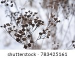 Dried Plant On A Snowy Winter...