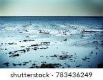 landscape of marsh full of... | Shutterstock . vector #783436249
