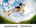 Stock photo dog caught in the middle of a jump 78346411