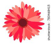 Gerbera Daisy Isolated. Vector...