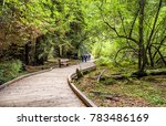 people walking at the muir...   Shutterstock . vector #783486169