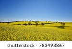 canola field  new south wales ... | Shutterstock . vector #783493867