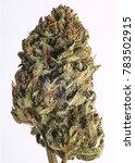 cured cannabis macro bud shot. | Shutterstock . vector #783502915