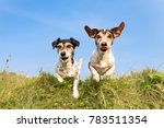 dog hopping over a green hill... | Shutterstock . vector #783511354