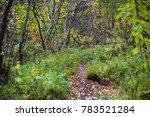 Narrow Footpath Trail Through...