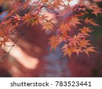 Soft Focus Of Red Maple Leaves...