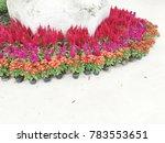 modern garden design   Shutterstock . vector #783553651