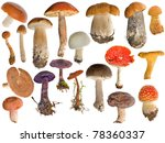 Nineteen Mushrooms Collection...