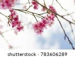 pink cherry blossom | Shutterstock . vector #783606289