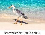 beautiful wild white heron on a ... | Shutterstock . vector #783652831