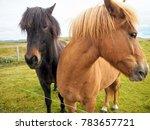 Iceland  Two Horses