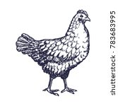 hand drawn chicken engave style ...   Shutterstock .eps vector #783683995