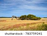 Australia  The Leaning Tree Of...