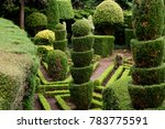 beautiful bushes at madeira... | Shutterstock . vector #783775591