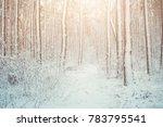 tree pine spruce in magic... | Shutterstock . vector #783795541