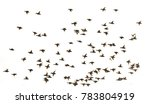 this is a birds flying.it is...   Shutterstock . vector #783804919