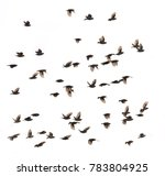 this is a birds flying.it is...   Shutterstock . vector #783804925