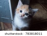 Stock photo cat cute young 783818011
