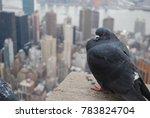 Pigeon In Manhattan