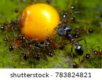ants working together to carry... | Shutterstock . vector #783824821