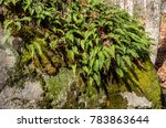 Small photo of ferns and moss growing on a large bolder