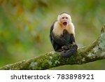 white headed capuchin  black... | Shutterstock . vector #783898921