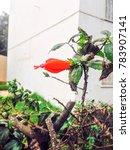 red flower in moroccan nature | Shutterstock . vector #783907141
