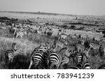 Small photo of Huge herd of Plains Zebra shot in soft focus to suggest motion