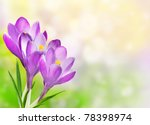 Floral Border With Crocuses