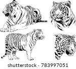 vector drawings sketches... | Shutterstock .eps vector #783997051
