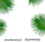 green palm tree leaf with... | Shutterstock . vector #783999985