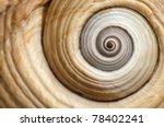 Sea Shell Spiral