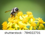 Macro View Of A Bumblebee On...