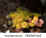 Small photo of Soft coral. Actiniaria. Philippines, Bohol
