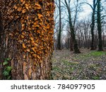 beautiful tree texture | Shutterstock . vector #784097905