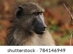 baboon sitting next to the road ... | Shutterstock . vector #784146949