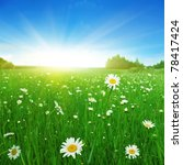 field of daisies in summertime. | Shutterstock . vector #78417424