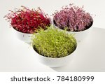 microgreens in white bowls ... | Shutterstock . vector #784180999
