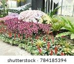 modern orchid garden design | Shutterstock . vector #784185394