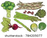 hand drawn colorful vegetables   Shutterstock .eps vector #784205077