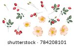 set of rosehip s flowers and...   Shutterstock .eps vector #784208101
