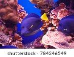 eilat coral reef | Shutterstock . vector #784246549