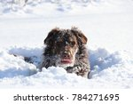 Stock photo winter snow dog 784271695