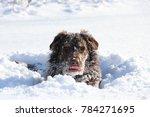 Stock photo winter snow dog 784271695