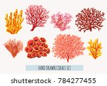 beautiful hand drawn botanical... | Shutterstock .eps vector #784277455