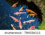 japanese carps  koi in a garden ... | Shutterstock . vector #784336111