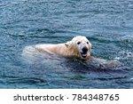 the polar bear  ursus maritimus ...   Shutterstock . vector #784348765